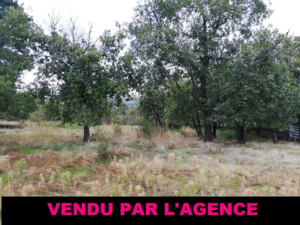 terrain,1118